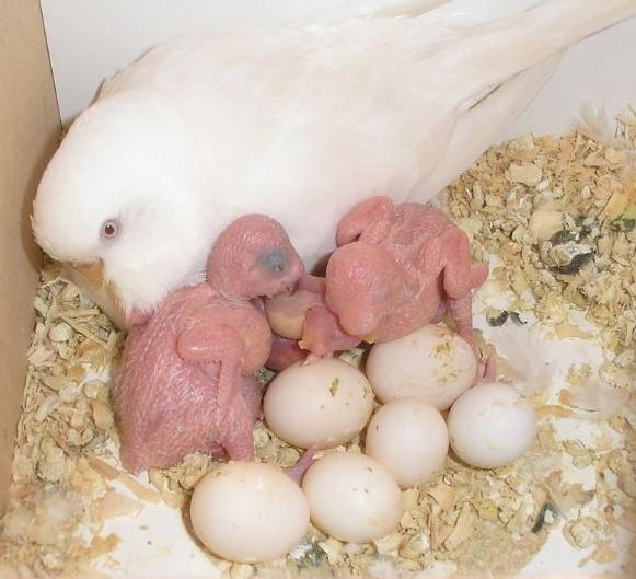 مشروع عصافير الزينه
